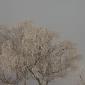 vinterskud