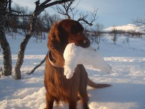 Jakt på vinterfjället